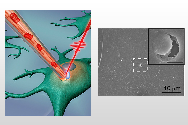 Pei-Yu Chiou: Story on photothermal nanoblade technology featured in the Proceedings of the NAS