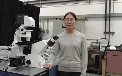 Lihua Jin applies soft material mechanics to build soft robots and stretchable electronics