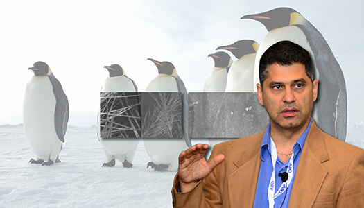 Pirouz Kavehpour: Penguins' Anti-Ice Trick Revealed