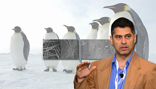 Pirouz Kavehpour: Penguins' Anti-Ice Trick Revealed